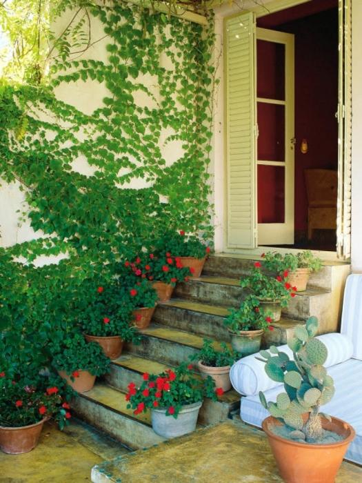 Оригинальное сочетание вьющихся растений с цветами в горшках. Фото: google.ru.