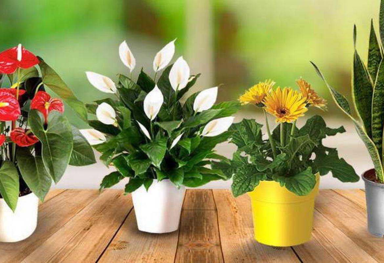 Картинки по запросу комнатные растения